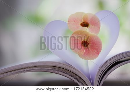 Couple of big Crown-of-thorns flower on heart shape which made by white paper notebook. Clear bright nature background