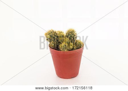 Small Cactus In A Flowerpot