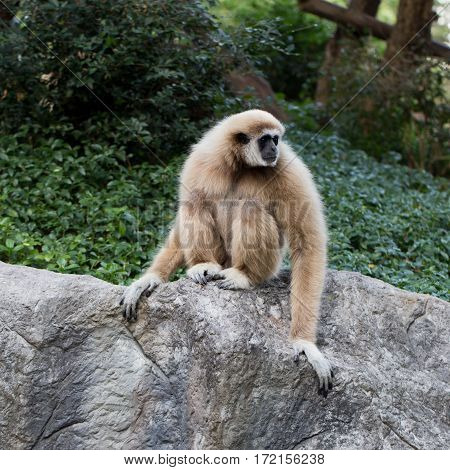 Cute monkey sitting on the stone photo for you