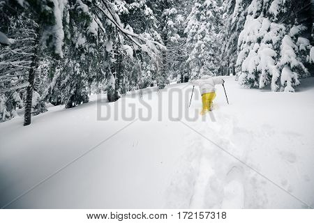 Traveler Goes On Snowshoes In Deep Snow