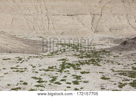 Small valley with little vegetation between arid ground slopes in desert