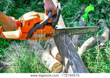 Cutting wooden logs electric chainsaw in the forest