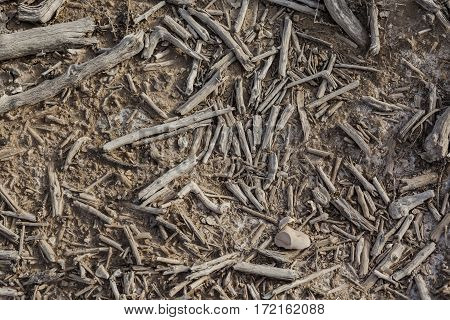 Earth covered with dry fallen pieces of wood sticks and twigs