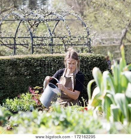 HELSINGBORG SWEDEN - MAY 07 2016: Girl working as gardener at Sofiero water the plants using an ewer. May 07 2016 Helsingborg Sweden