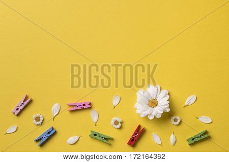 Spring or summer background with copy space for text: chamomiles and petals many bright multicolored clothespins white flower with yellow heart. Top view. Flat lay.