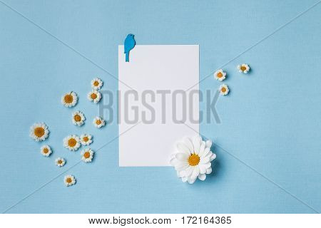 Spring top view composition: blank stationary template / invitation mockup white flower with yellow heart small chamomiles around blue bird. Sky blue background with copy space for text. Flat lay.