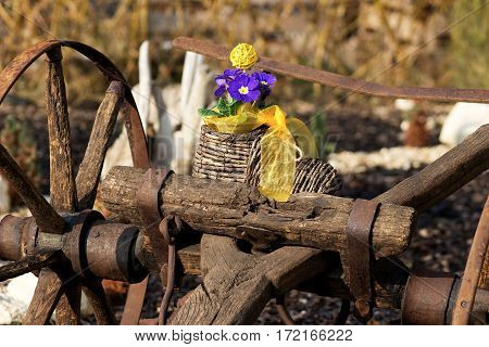 nice blue primrose in a wicker hand-knit boot with a yellow ribbon on a old rust wooden track