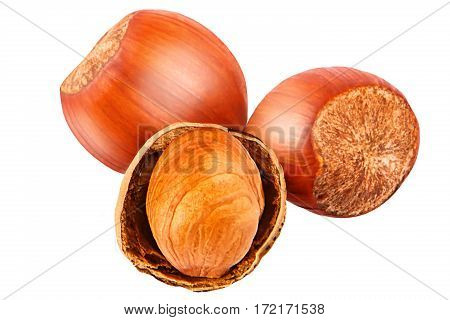 Hazelnut. Fresh organic filbert isolated on white background as package design element. Nut macro.