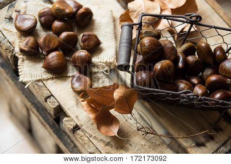 Fresh shiny chestnuts in wire basket scattered on burlap cloth dry brown leaveson vintage wood box autumn fall harvest cozy atmosphere