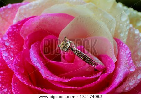 Diamond Golden Ring On The Rose Petals, Valentine's Day Present