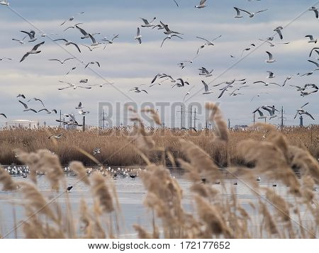 The ducks and gulls flying over the lake with water and ice floes