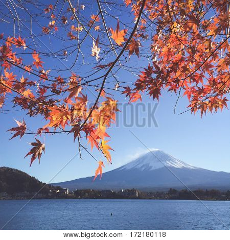 Mount Fuji and sakura in spring at Kawaguchiko japan. Cherry blossom Sakura . Beautiful blossom sakura in japan.