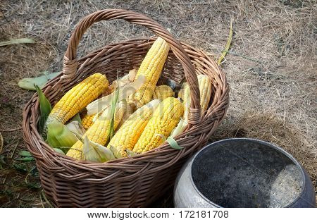 At the fair in the basket of maize for sale. Next is a cast iron pot for cooking corn.