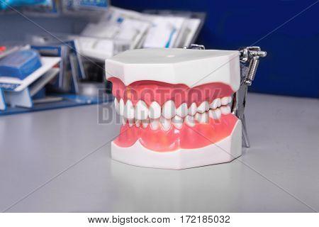 Set of close up dental model denture dentoform.