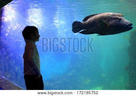 Child Looking At Big Fish