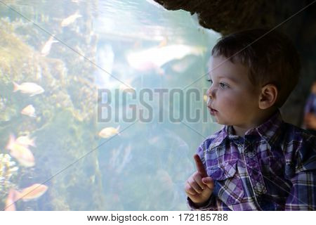 Kid Looking At Fishes