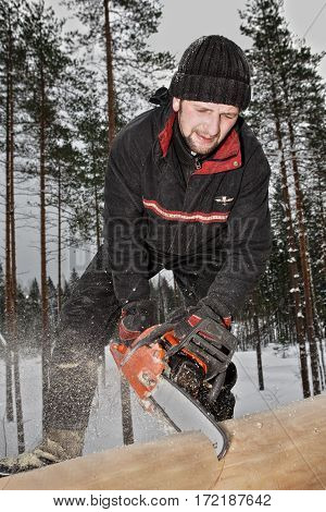 Leningrad Region Russia - February 2 2010: Construction of a log blockhouse a young worker saws logs using a chainsaw sawdust and shavings are scattered in all directions.