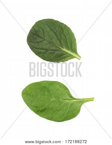Fresh salad leaf isolated over the white background, set of two different foreshortenings