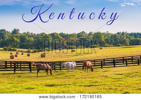 Kentucky card.. Horses at horse farm at golden hour. Country summer landscape.