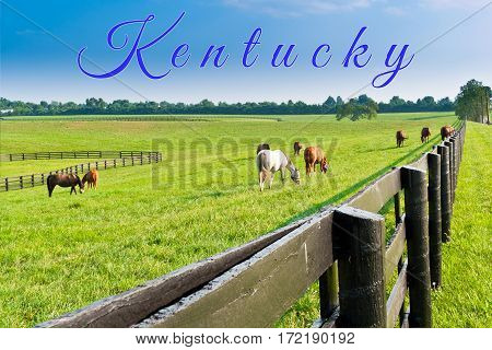 Kentucky card.. Horses at horse farm. Country summer landscape.