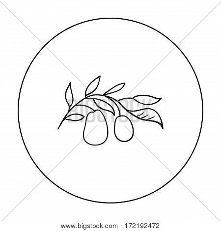 Italian olives from Italy icon in outline style isolated on white background. Italy country symbol vector illustration.