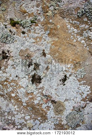 Old stone surface with lichen. Close up.