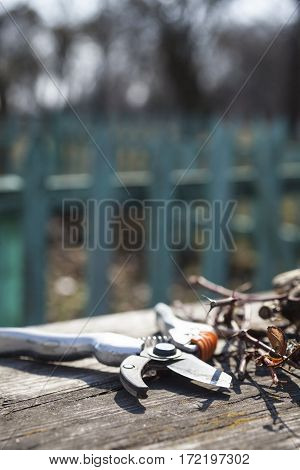 Pruning shears and cut branches on the wooden surface.