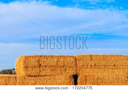 Close up of stacked straw bales with a blue sky in the background.