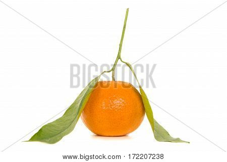 Single orange mandarin fruit with leaves and stem isolated on a white background