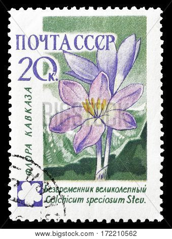 SOVIET UNION - CIRCA 1960 : Cancelled postage stamp printed by Soviet Union, that shows Autumn Crocus flower.