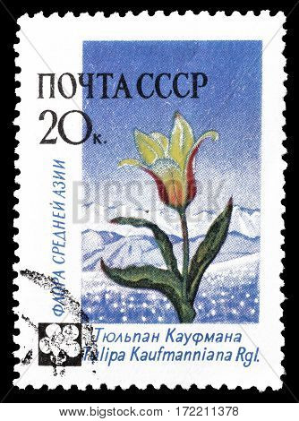 SOVIET UNION - CIRCA 1960 : Cancelled postage stamp printed by Soviet Union, that shows Aster flower.