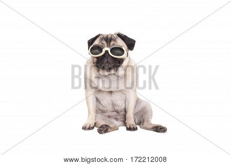 cute pug dog puppy dog sitting down and wearing goggles to protect eyes isolated on white background