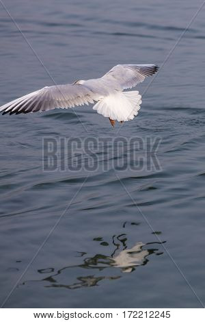 a cute white seagull flying on lake