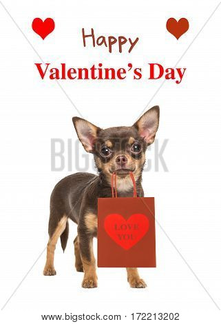 Pretty brown chihuahua dog standing and facing the camera isolated on a white background holding a gift bag with text