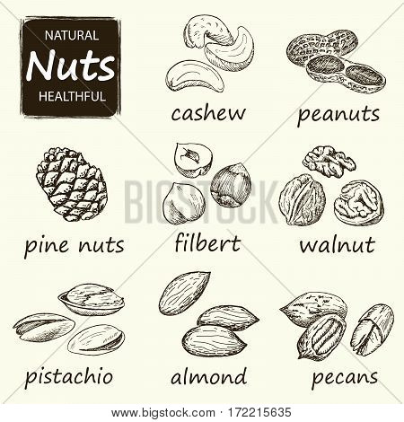 Nuts set. Hand drawn vintage illustration. Natural and healthful nuts background. Line art style.