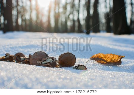 walnuts for animals in the park on winter