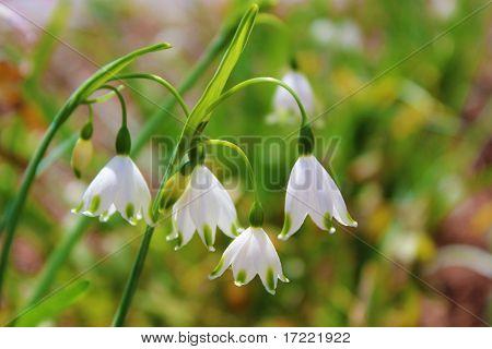 Dainty Bell-Shaped Flowers