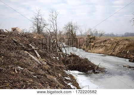 Felled trees by the river. Cut down the trees. wood industry. Felling and cutting of forests. Supply of tree trunks.