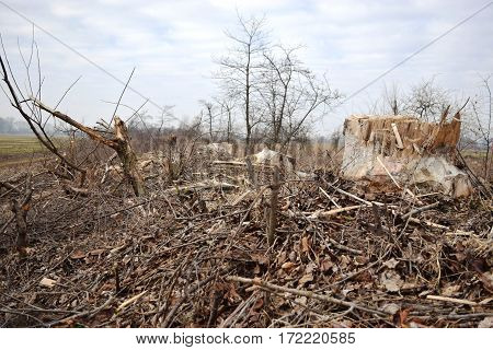 Cut down the trees. wood industry. Felling and cutting of forests. Supply of tree trunks.
