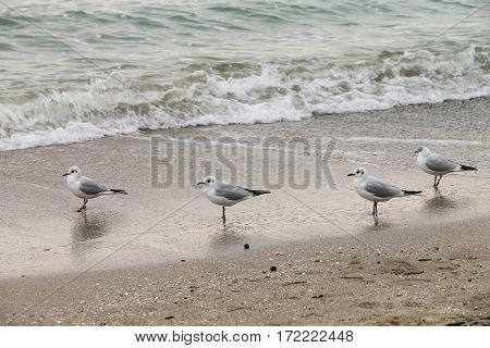 Four seagulls standing on the wet sand
