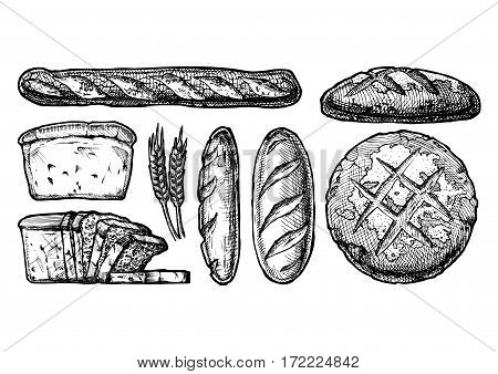 Vector hand drawn illustration set of different breads: wheat germ long loaf pan loaf (sliced) baguette and boule. Black and white isolated on white.