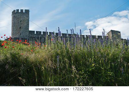 Poppy flowers below Kalemegdan fortress in Belgrade, Serbia