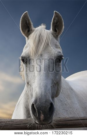 Portrait of a white horse on a background of sky