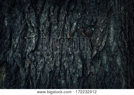 old wood tree bark texture with green moss.