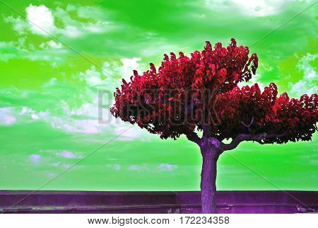 Dreamy nature picture of tree with reverse colors background