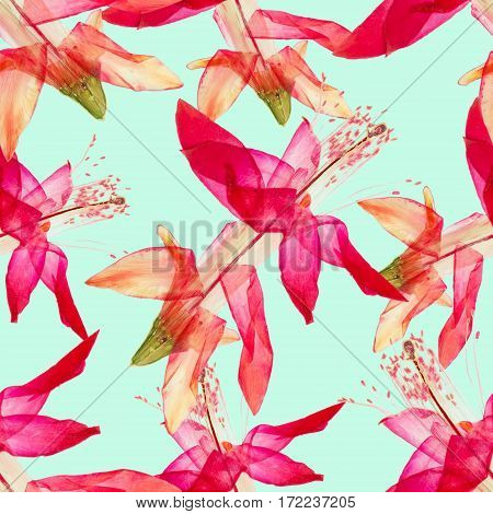 Schlumbergera Christmas Cactus. Texture of flowers. Seamless pattern for continuous replicate. Floral background photo collage for production of textile cotton fabric. For use in wallpaper covers.