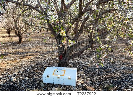 ALMOND GARDEN ISRAEL - FEBRUAR 17 2017: Box with bees from the biological station in the garden almond trees for pollination