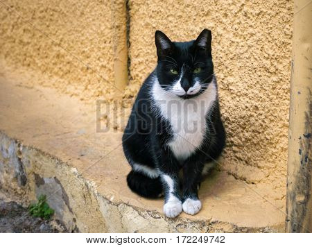 Street cat sitting and watching. Yellow wall at the background.