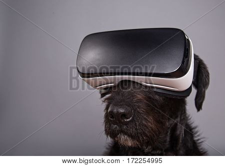 Black dog immersed in virtual reality on grey background.