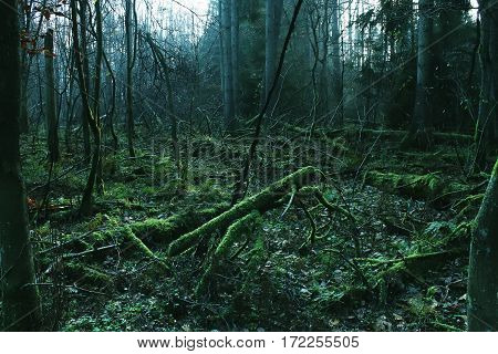 Fallen Trees, Fallen Trees In The Moss, Forest Thicket